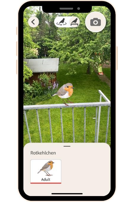 AR bird graphics